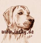 Hund,Ridgeback,Löwenhund,Portrait, Zeichnung,incky